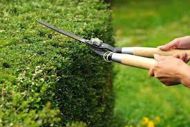 Taxus snoeien tuinonderhoud